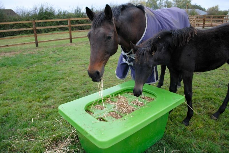 feeder pallet horse and feeders slow stables wooden hay farm pin feed box